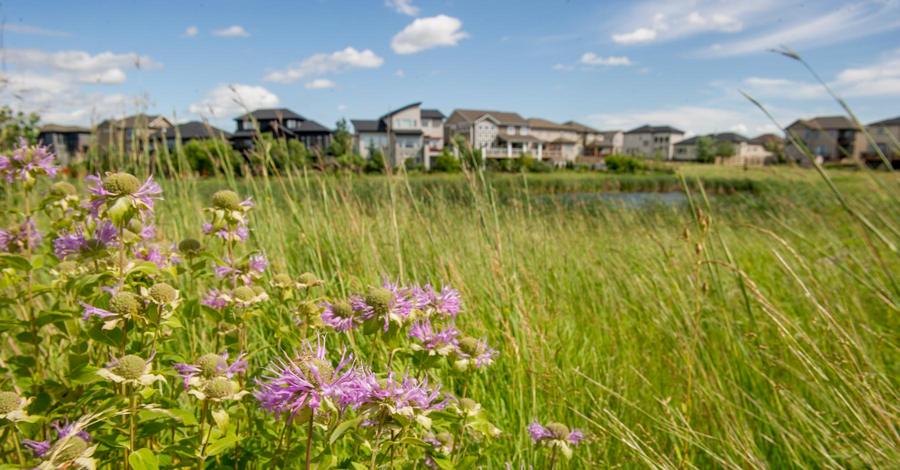 Nature - Grasses, Flowers and Homes